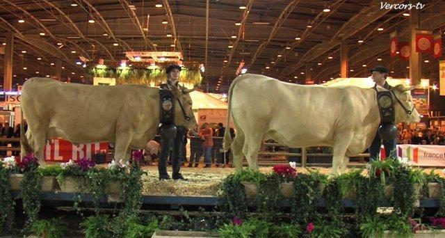 Vercors vache villard de lans villarde salon de l for Vache salon de l agriculture